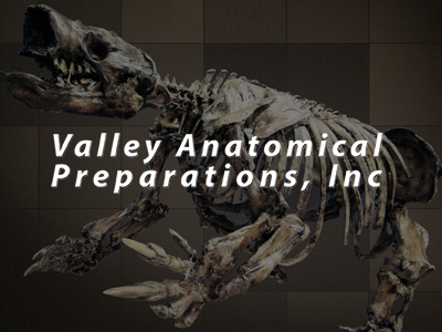 Valley Anatomical Preparations